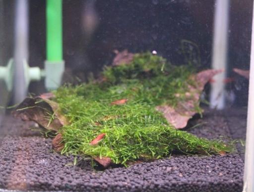 画像1: 水槽のレイアウトに是非! おまかせモス付流木Sサイズ